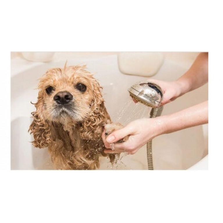 Чем мыть лапы питомцам после прогулки?