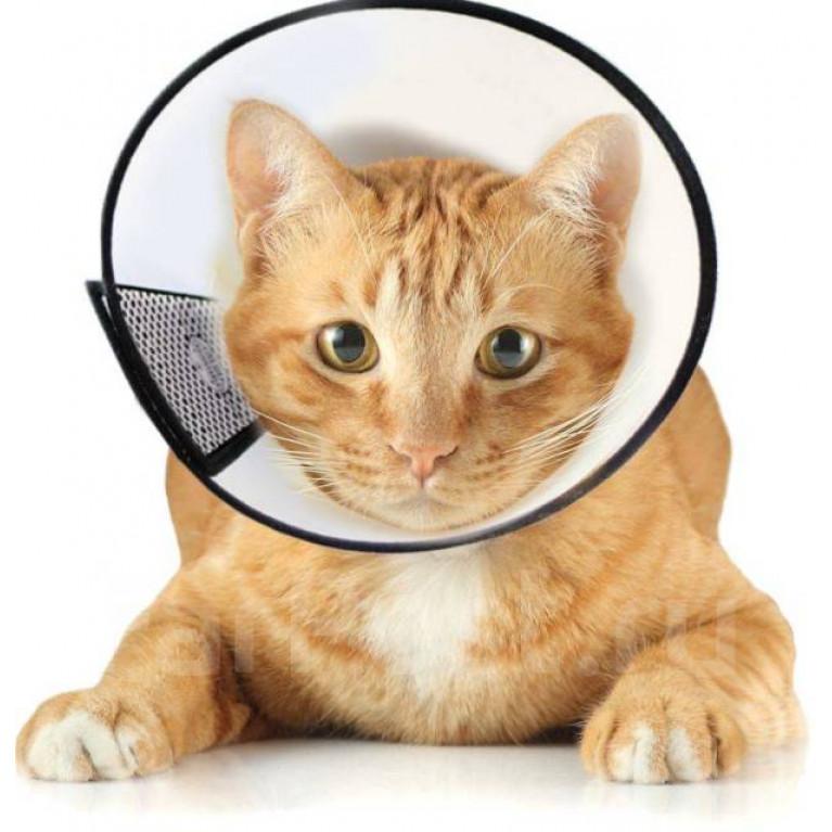 Защитный воротник для собак и кошек Ecopet