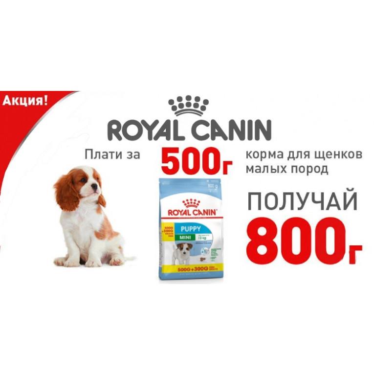 Royal Canin 500+300*