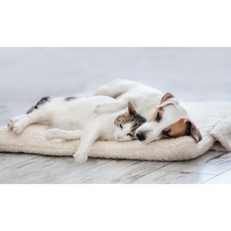 Для чего собаке нужен лежак? Пять причин приобрести лежак