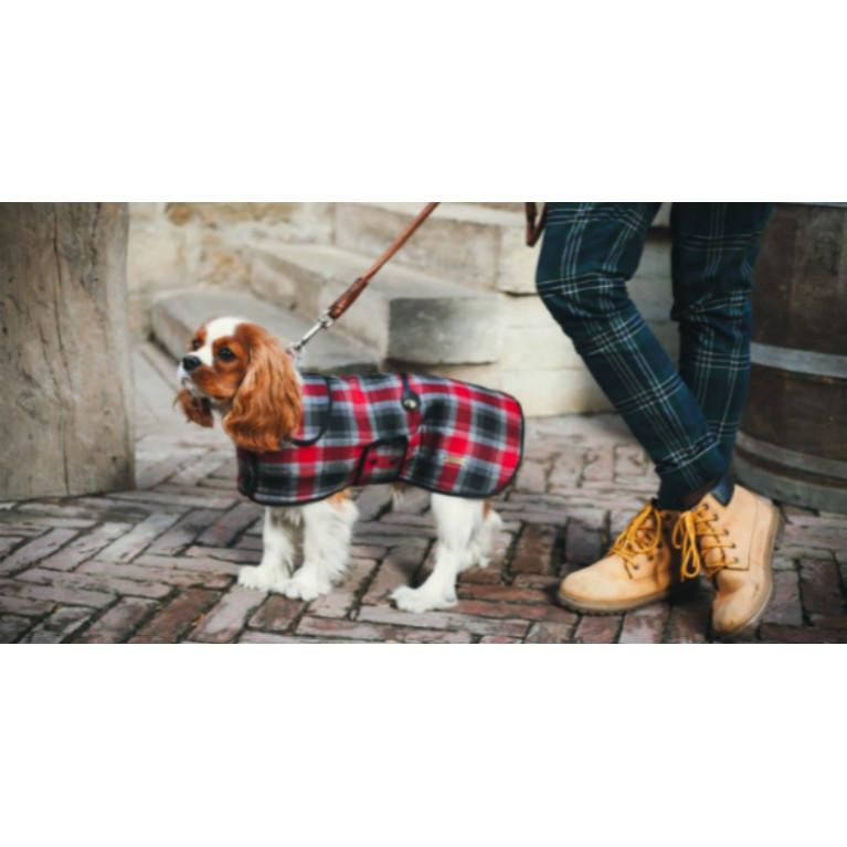 Одежда для собак: прихоть хозяина или необходимость?